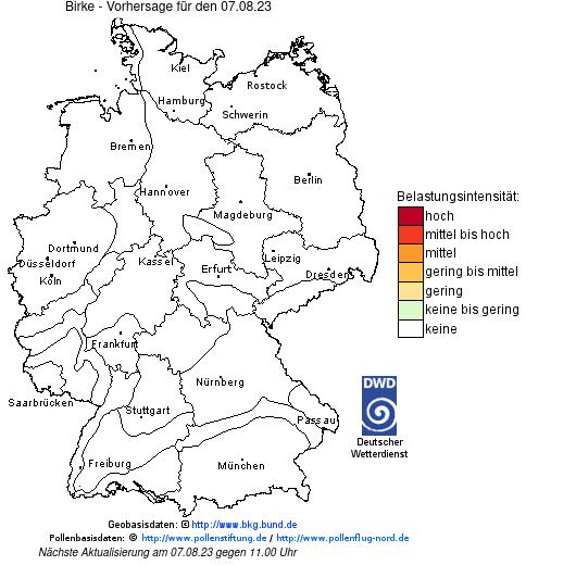 Pollenflug Birke 2021